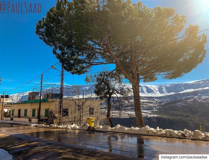 qartaba  kartaba  lebanon  tree  road  snow  mountain  jbeil ... (Qartaba)