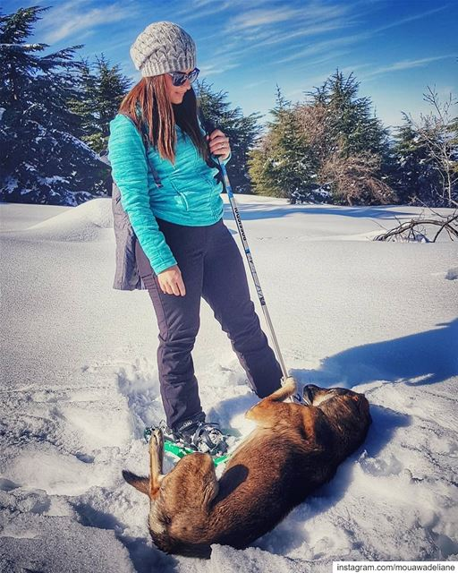 Wake up ...we gonna move🐶.... snow  livelovelife  livelovenorth ... (Hadath El-Jubbah, Liban-Nord, Lebanon)