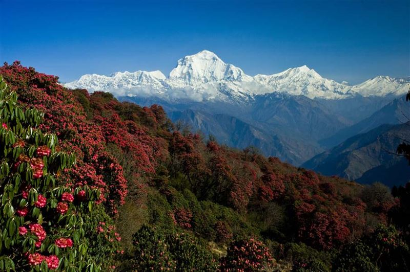 Tours Trekking in Nepal