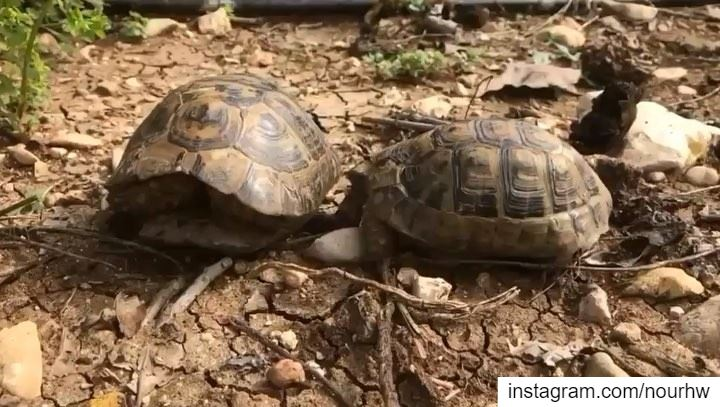 Observe life from different angles 🐢🇱🇧•••• walkview  skyfall ...