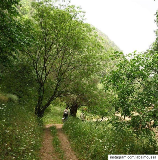 In every walk in  JabalMoussa one receives far more than he seeks.... (Jabal Moussa Biosphere Reserve)