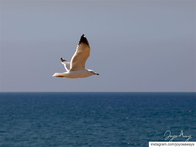 """Grace is what picks me up and lifts my  wings high above and I  fly! ... (Beirut, Lebanon)"