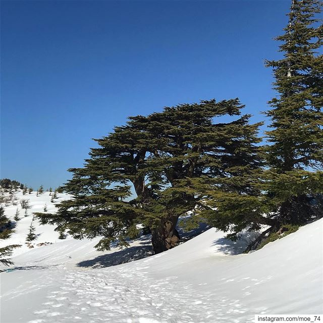 The shot I never get bored taking over and over again! lebanon  lebanese ... (Al Shouf Cedar Nature Reserve)
