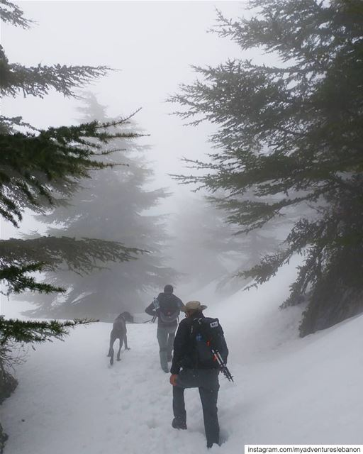 Into the wild 🗻 myadventureslebanon mountaineering  choosemountains ... (Lebanon)