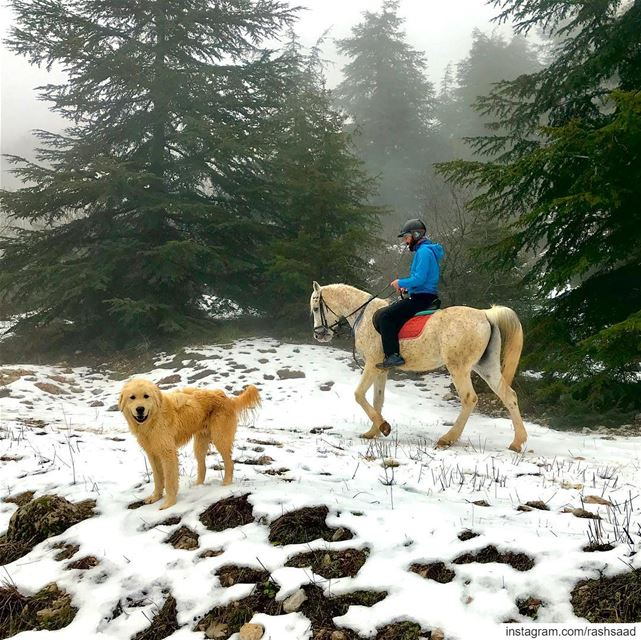 What is better than making one new four legged friend 🐎🐕....... (Shouf Cedar Ain Zhalta)