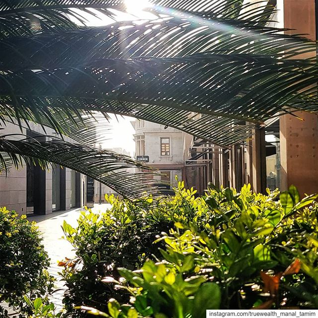 This may look so ordinary..But when you melt with nature,, you'll be... (Beirut Souks)