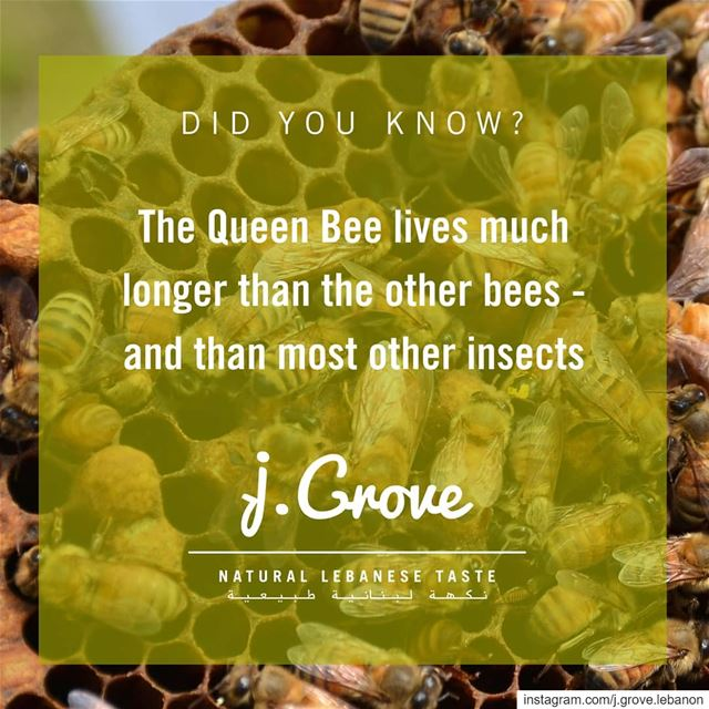 While worker bees live about 6 weeks on average, the  QueenBee can live...