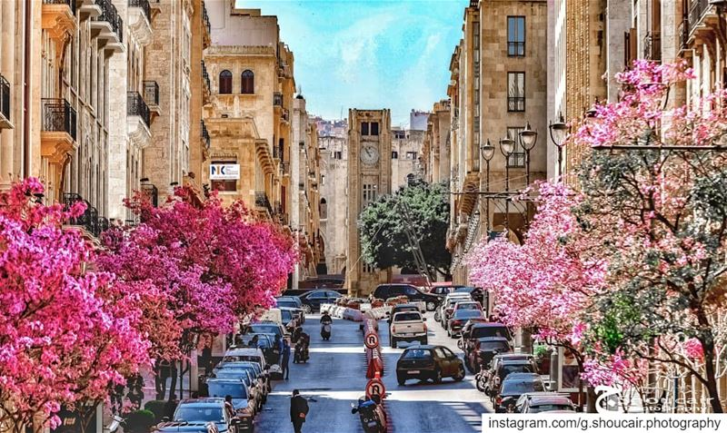 The Beautiful Allenby Street_____🔴⚪⚪🌲⚪⚪🔴_____ gshoucairphotography ... (Beirut, Lebanon)