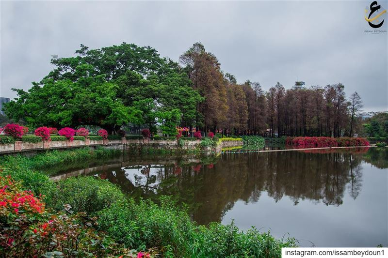 photography  canon70200  followforfollow  like4like  instabeauty ... (Guangzhou, China)