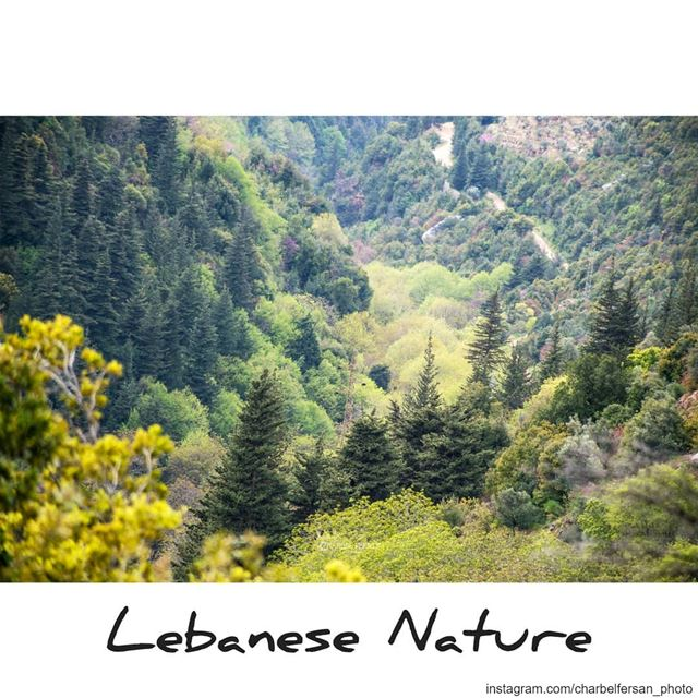 Hiking with @routeslb and exploring the beauty of the Lebanese nature... (Qannoubine Valley)
