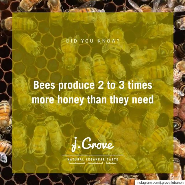 Unlike wasps and bumblebees, honey bees store excess food in their hives...