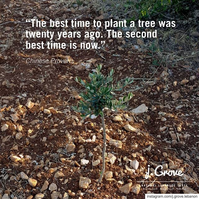 If we planted just one tree each, imagine the difference it would make in...