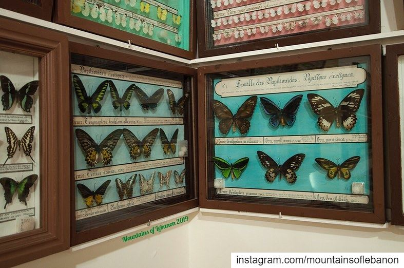 The Butterflies and (stuffed) animals museum in Qobayat...  roadtrip ... (Al Qubayyat, Liban-Nord, Lebanon)