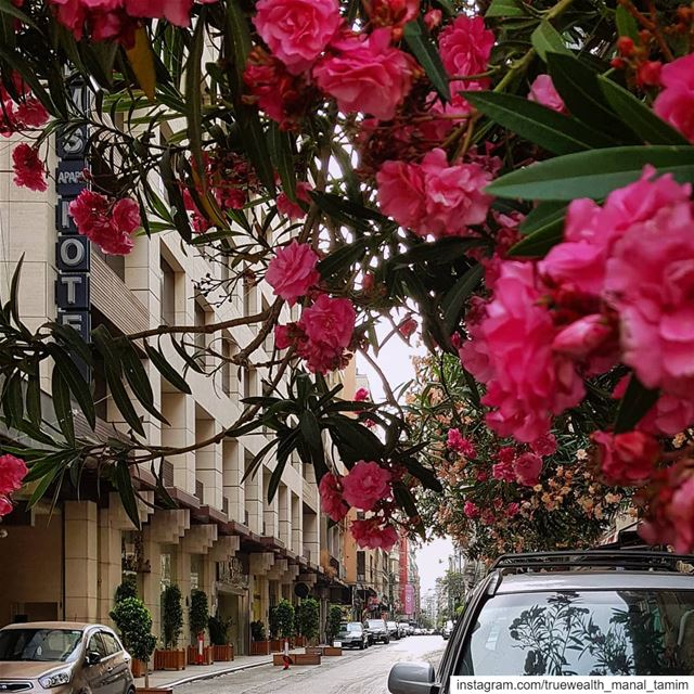 When your heart runsYour eyes followAnd when your eyes beatYour heart... (Hamra, Beyrouth, Lebanon)