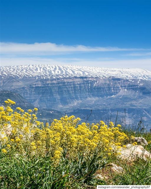 Good morning from Akoura 🏔🌼 - Beautiful snow covered Mount Sannine and... (Akoura, Mont-Liban, Lebanon)