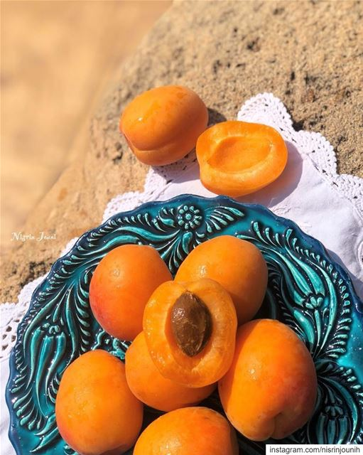 مشمش 🧡 freshapricot  yummy  deliciousfruits  lebanon  jnoubing ... (South Governorate)