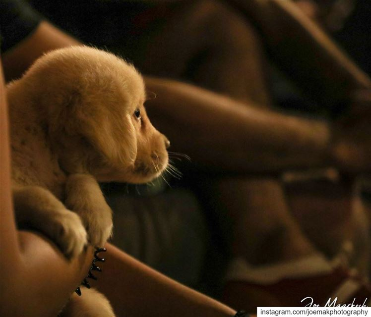 "I'm not alone,"" said the boy. "" I've got a puppy.Jane Thayer puppy ..."