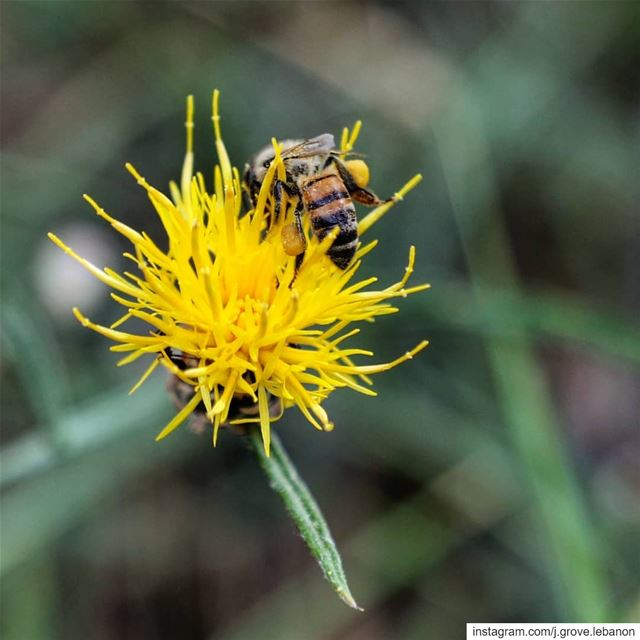"When a worker bee collects wild flower pollen, she stocks it in ""pollen..."
