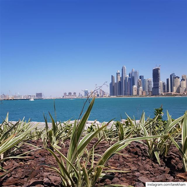 Earth Grows, Air Blows, Water Flows and Spirit knows... dubai  uae ... (Bluewaters Island)