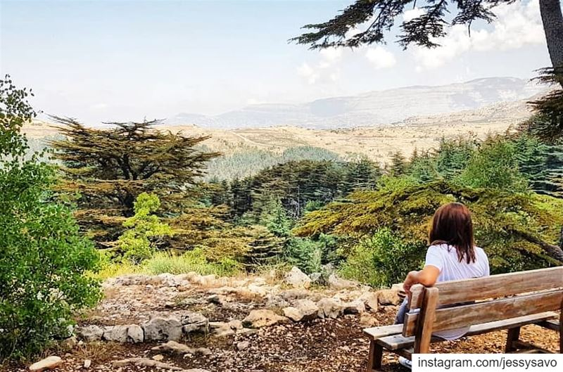 Sometimes you just need a break, alone, in a beautiful place, to figure... (Cedar Reserve Tannourine)