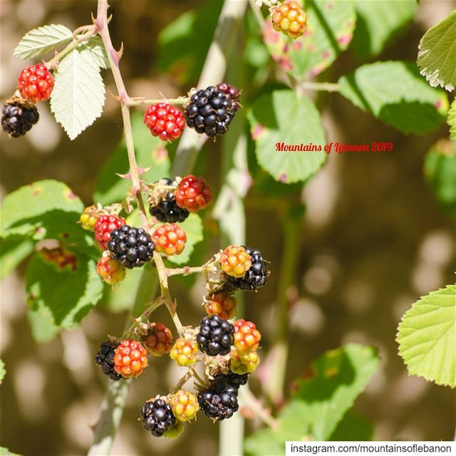 the season is on! If you haven't tasted the local wild (water)berries,...