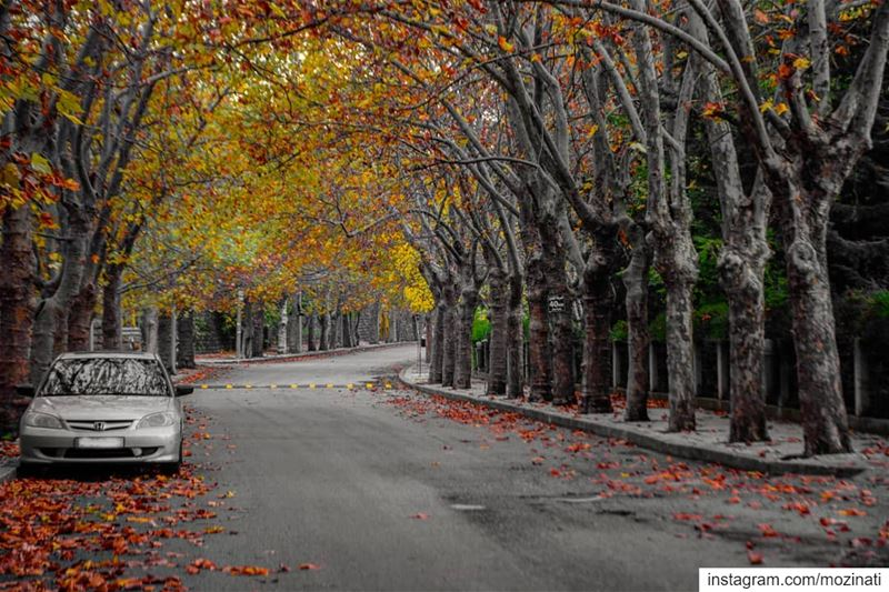 How beautiful the leaves grow old... How full of light and color are their... (Sawfar, Mont-Liban, Lebanon)