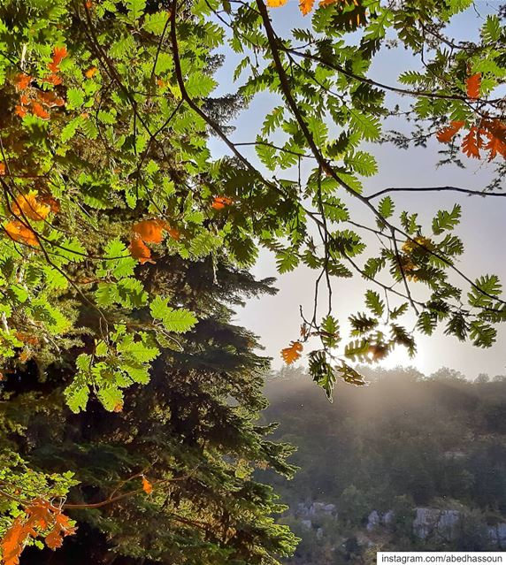 It's Autumn 🍂...Horsh Ehden, North Lebanon 🇱🇧.............. (Horsh Ehden)