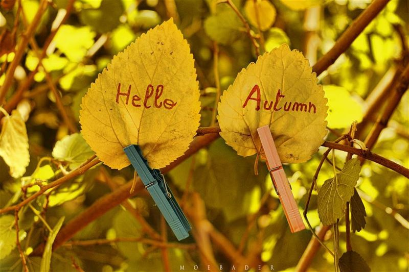 ▪Hello Autumn .▪Hello September .▪My Fav Season ❤----------------------- (At Home)