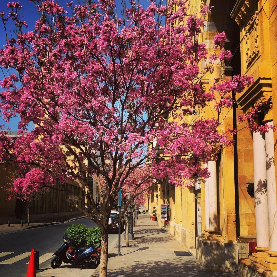 spring time spring trees colors springleaves beirut lebanon
