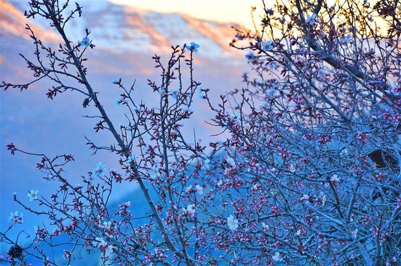 Spring it on nature! mountains  blossom  nikon  sunset  landscape ...