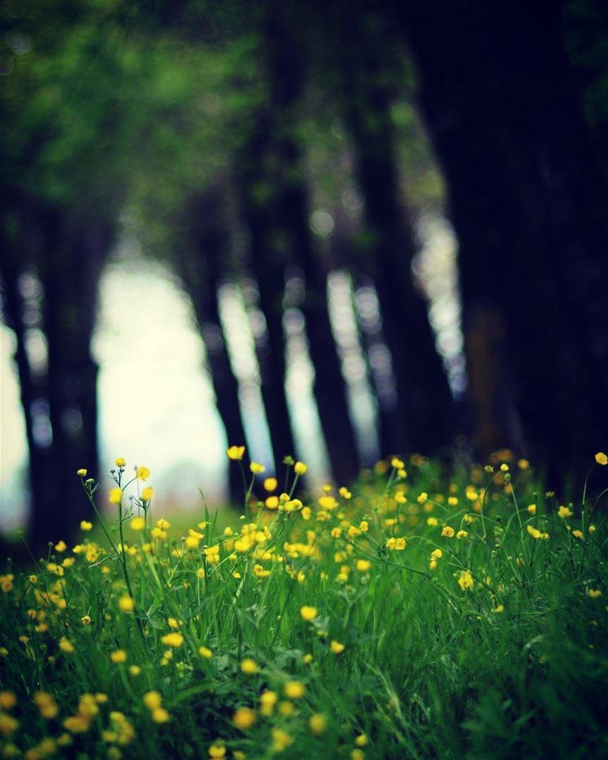 Good Morning Beauty Nature Green Spring Livelovelebanon