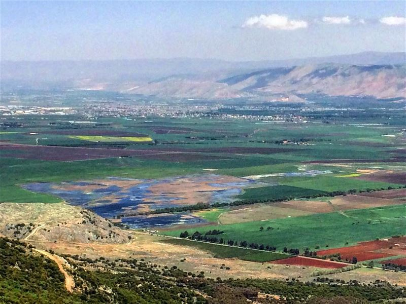 Color mix in Aammiq, our largest remaining freshwater wetland in Lebanon... (Al Shouf Cedar Nature Reserve)