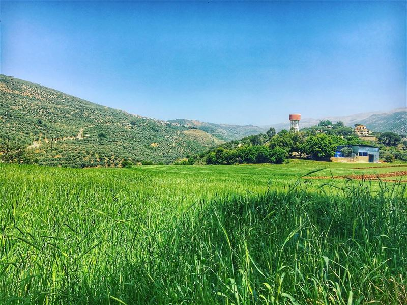 Green 🌿 nature  vibes 🌾 (Hasbaya)