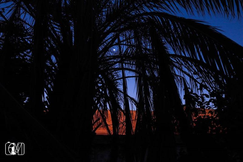 Spot the  FullMoon  Sunset  sunsettime  moon  palm  Tree  Nature ...