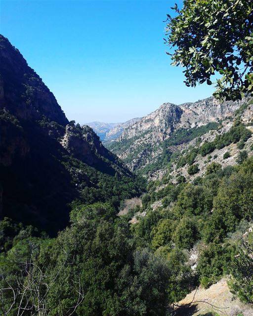 tb  kadisha  valley  bcharre  blue  sky  trees  Nature  natural ... (Kadisha Valley)