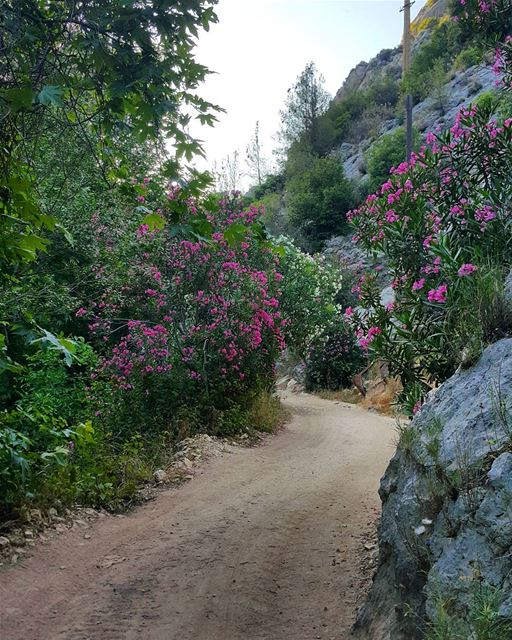 Colours of life spring  summer  nature  hamatoura  trails  trailslife ...