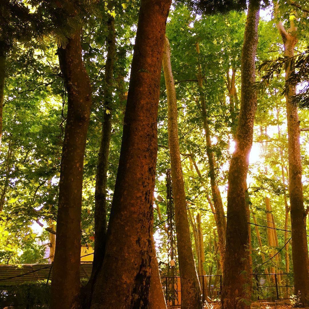 nature green tree trees sun sunlight forest garden high sky ...