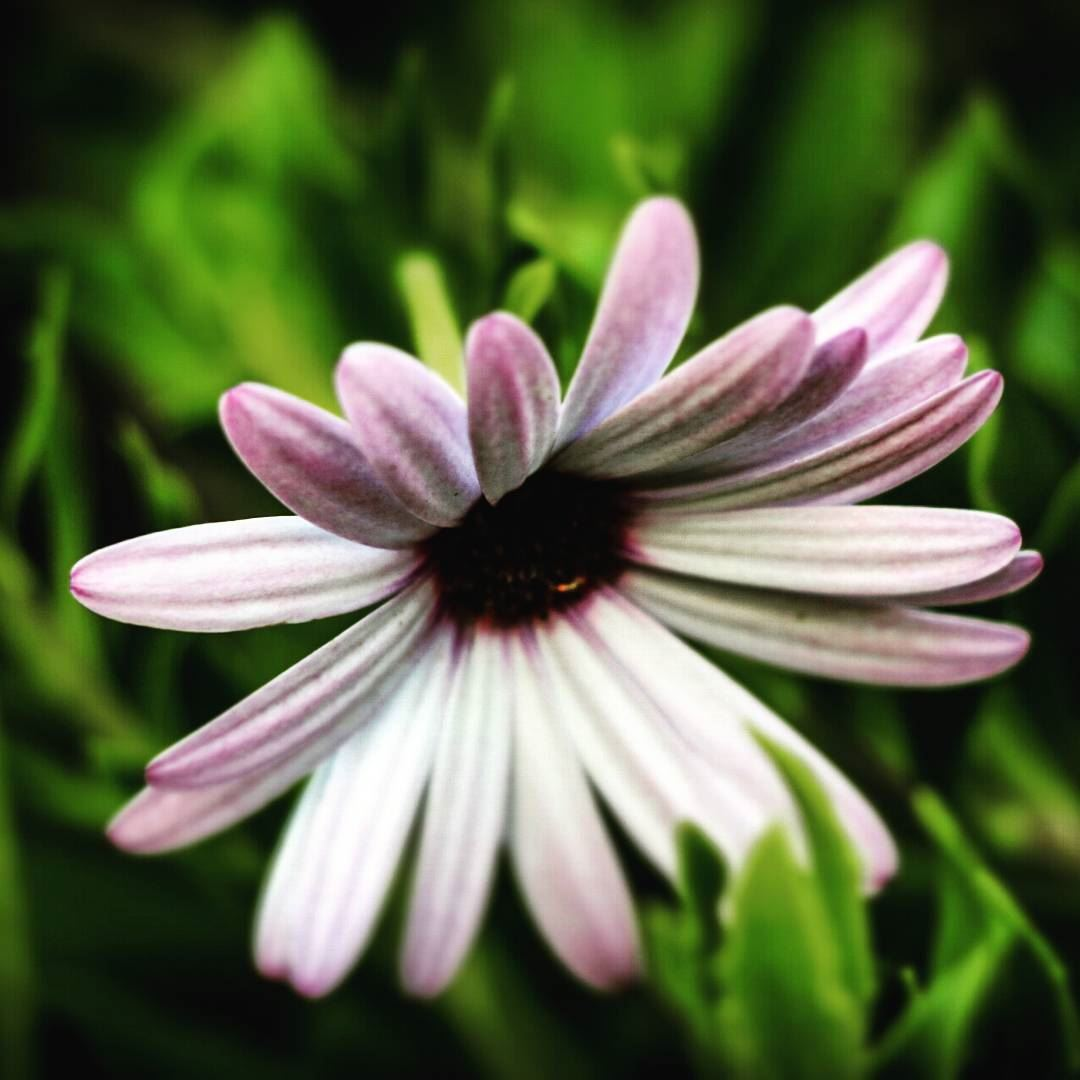 Why Too Shy Goodnight Flower Fleur Flora White Purple Nature