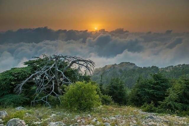 It is when we are broken , that we shine with grace ✨ photography ... (Al Shouf Cedar Nature Reserve)