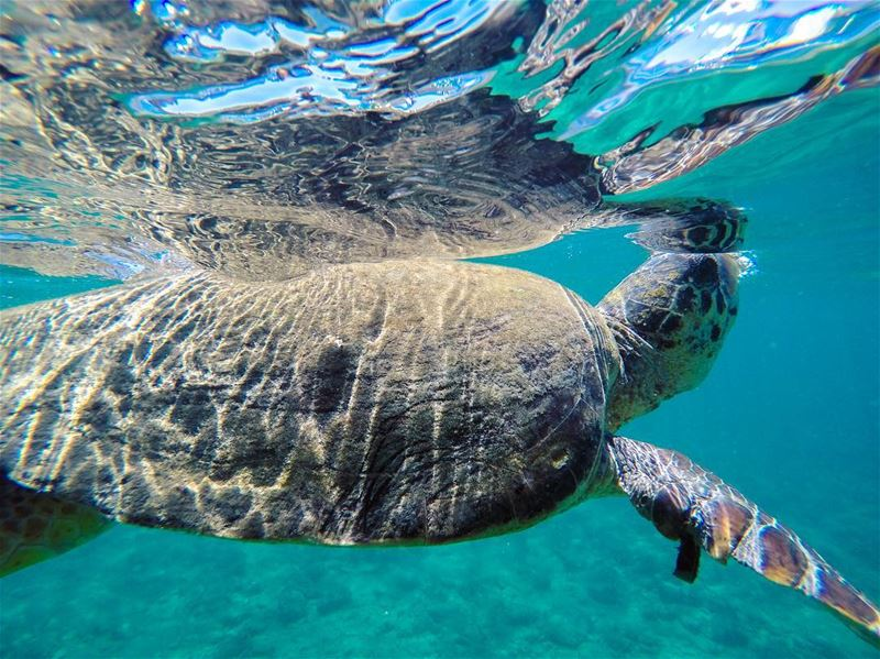 How long can a sea turtle hold its breath? Depending upon their level of... (صور - مدينة الأبجدية)