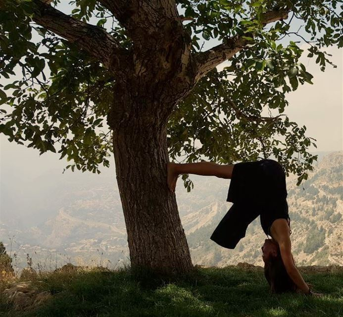 Stretching with mama tree  love  earth  below me   fire  within  me  tree ... (Bcharreh, Liban-Nord, Lebanon)