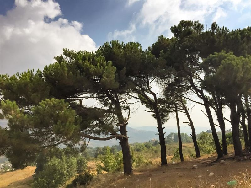 Happy dance  tree  pinetrees  clouds  cloudscape  treeoflife  ig_mood ... (Lebanon)