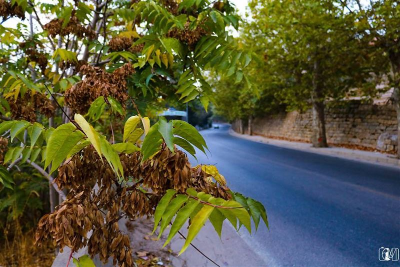 Autumn  Mood  road  snake  travel  Lebanon  Sawfar  LiveLovesawfar ... (Sawfar, Mont-Liban, Lebanon)