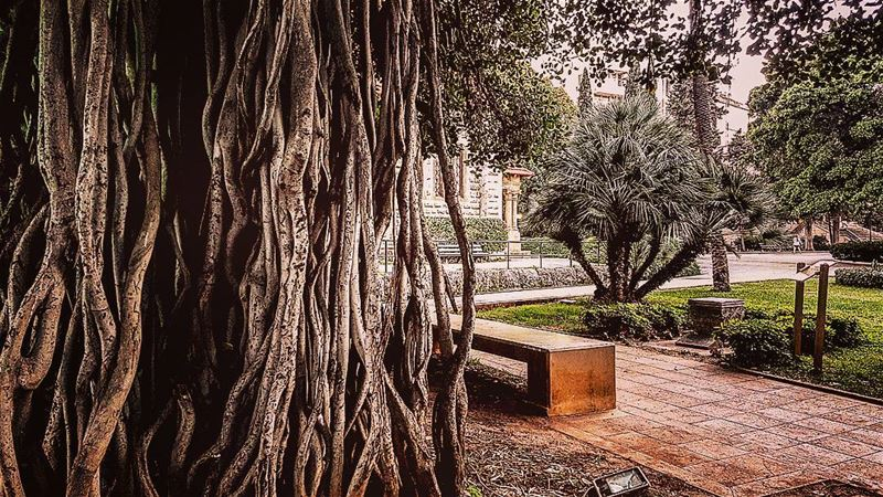 Just two types of roots, up and under... it's always a matter of... (American University of Beirut (AUB))