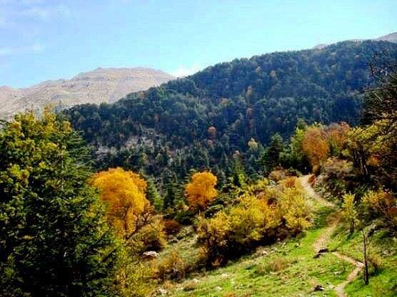Hiking Horsh Ehden - Sunday 19 November 2017-   sundayhikes  horshehden ... (Ehden, Lebanon)
