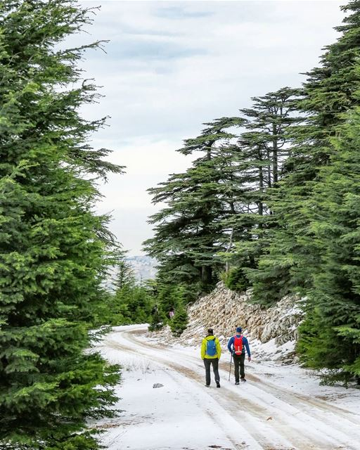 Frosty Trails ❄️🚶🌲 hiking  trails  snow  cedars  trees  cold  winter ... (Bmahray, Mont-Liban, Lebanon)
