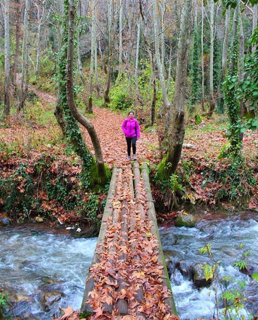 This is not a movie scene from Narnia! It is a hiking trail at the very... (Kadisha Valley)