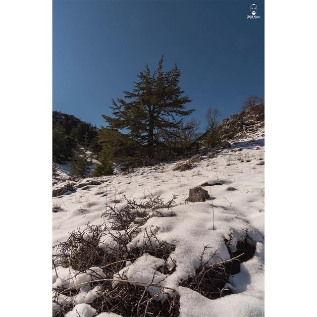 Who is ready for the snow this weekend?... (Arz el Bâroûk)