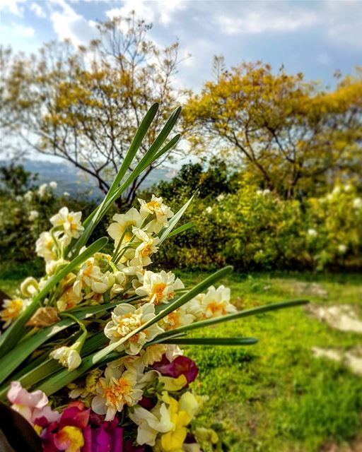 Am sure you can smell the beautiful perfume of this winter bouquet! And... (Joûn, Liban-Sud, Lebanon)
