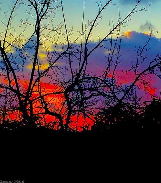 sunset  colors  tree  winter  clouds  sky...